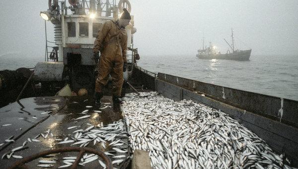 Улов рыбы на траулере. Архивное фото