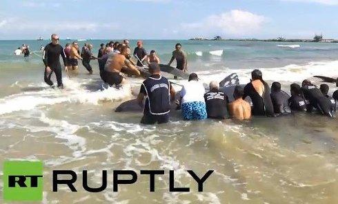 Киты выбросились на берег в Италии. Видео