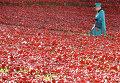 Королева Великобритании Елизавета II на инсталляции в память о жертвах Первой мировой войны