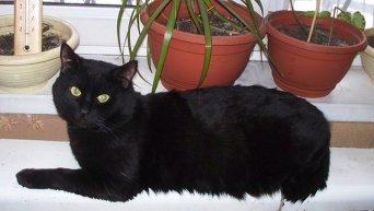 Кот лежит на батарее отопления