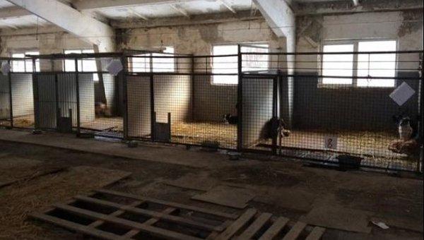 Приют для бездомных животных в Киеве