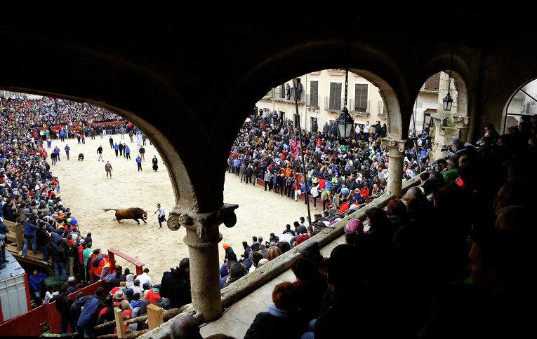 Бои быков в Испании