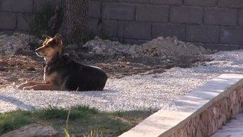 Могилу Виктора Януковича-младшего охраняет собака. Видео
