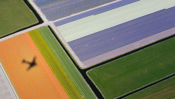 Цветочные поля близ парка Кекенхоф в городе Лиссе, Нидерланды
