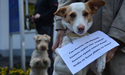 Митинг против травли собак