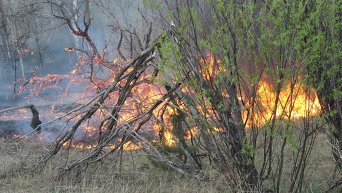 Пожар в зоне отчуждения Чернобыльской АЭС