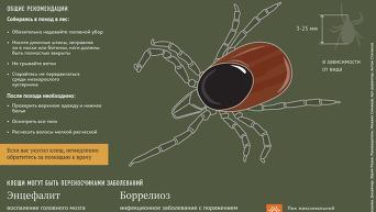 Защита от лесного клеща. Инфографика
