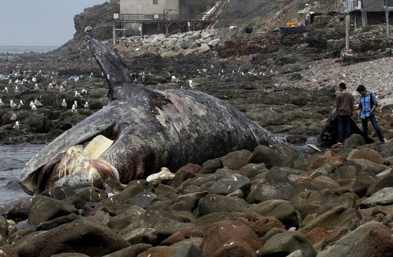 Жертвы синего кита в череповце