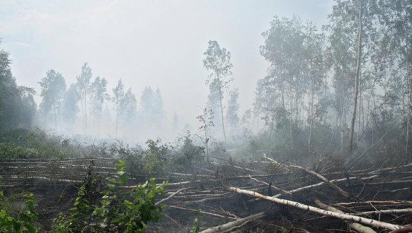 Тушение торфяных пожаров. Архивное фото