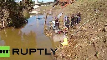 Наводнение в Тбилиси. Крокодил. Видео