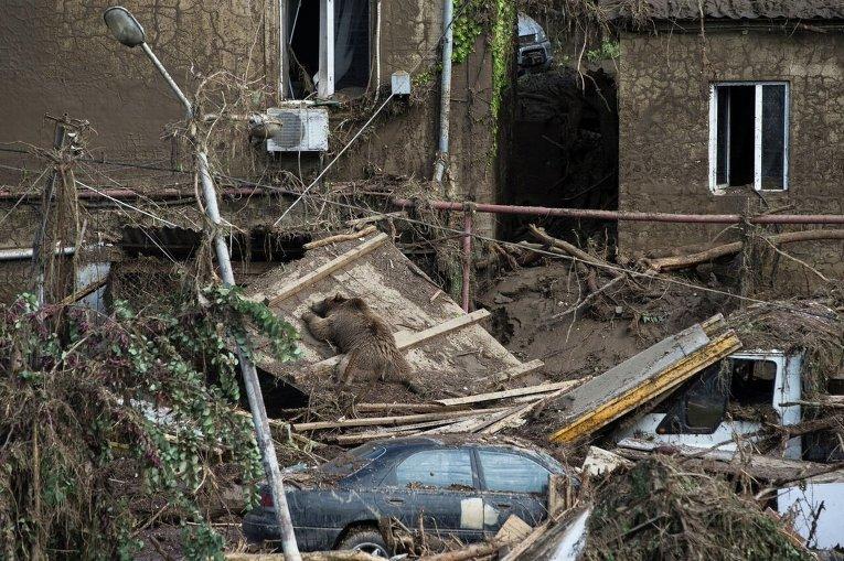 Ликвидация последствий стихии в Тбилиси
