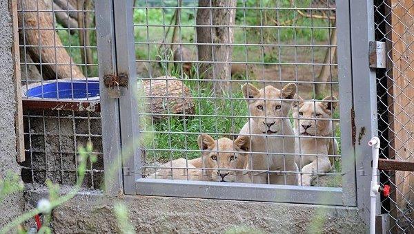 Расчистка заносов и спасение животных в зоопарке Тбилиси