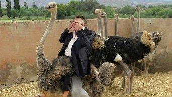 Фотожабы на слова Виктора Януковича о страусах