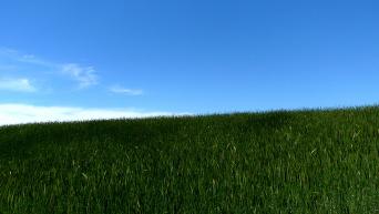 Земельный участок. Архивное фото