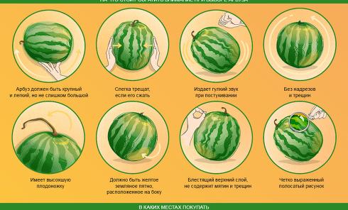Как выбрать спелый и сладкий арбуз. Инфографика