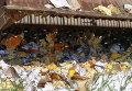 Уничтожение запрещенного к ввозу в Россию импортного сыра в Белгородской области
