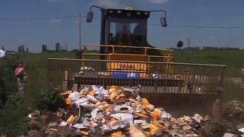 Уничтожение санкционного сыра в России. Видео