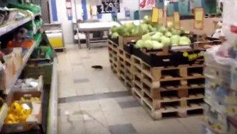 Крыса в супермаркете Велмарт