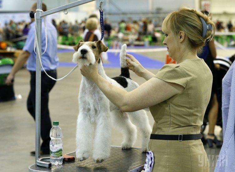 Международная выставка собак всех пород в Киеве