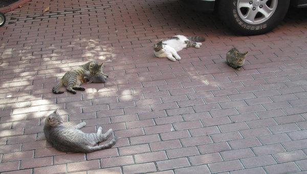 Коты на улицах Киева