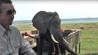 В Зимбабве слон набросился на туристов в национальном парке. Видео