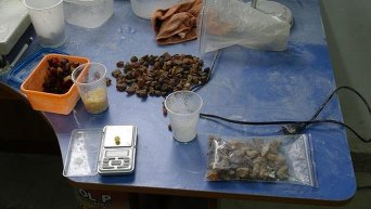 В Волынской области налоговики изъяли 13 килограммов янтаря