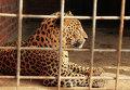 Животные из частного зоопарка Мариуполя Деревня Вашуры