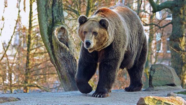 Пожилой японец отбился от нападения медведя приемами карате