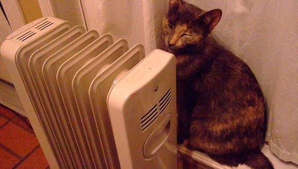 Кот у обогревателя