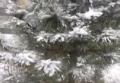 Первый снег в Украине. Видео