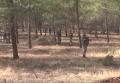 Сбитый ВВС Турции на границе с Сирией самолет оказался беспилотником. Видео