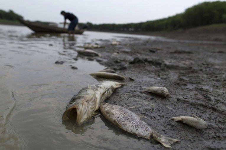Гибель рыбы в джунглях Амозонки в результате засухи.