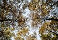 Золотая осень. Архивное фото