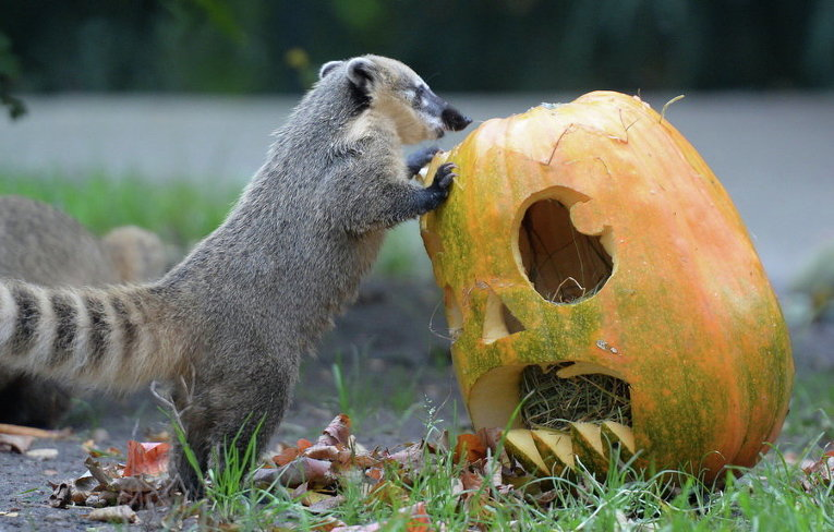 Хэллоуин в зоопарке Гамбурга в Германии